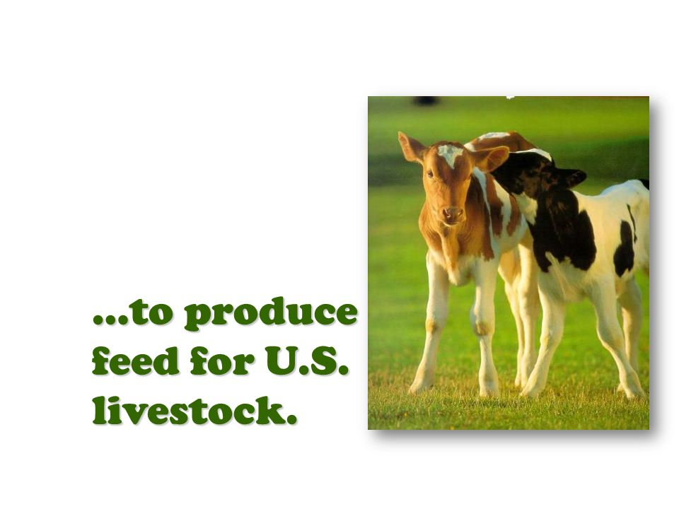 …to produce feed for U.S. livestock.