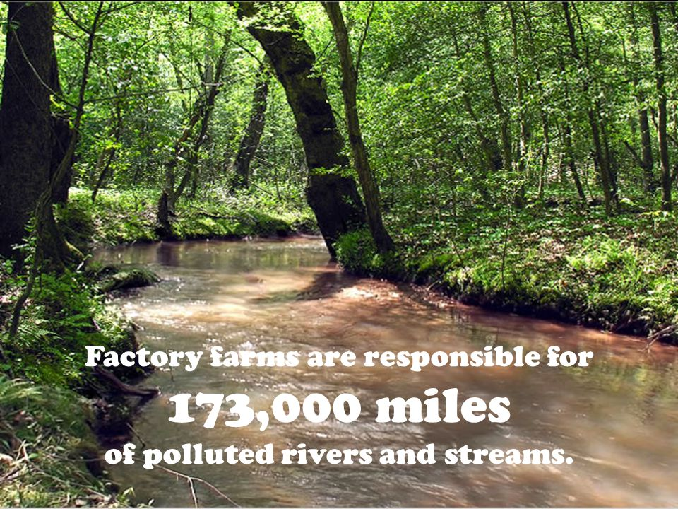 Factory farms are responsible for 173,000 miles of polluted rivers and streams.