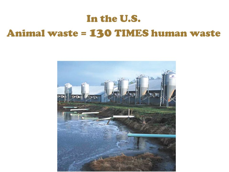 In the U.S. Animal waste = 130 TIMES human waste