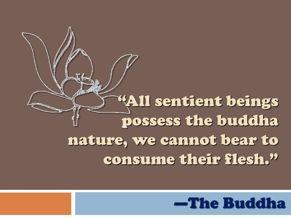 All sentient beings possess the buddha nature, we cannot bear to consume their flesh. The Buddha The Buddha