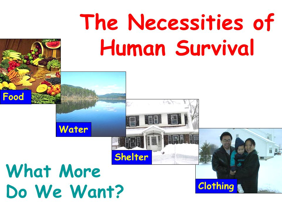 Clothing Shelter Water The Necessities of Human Survival Food What More Do We Want?