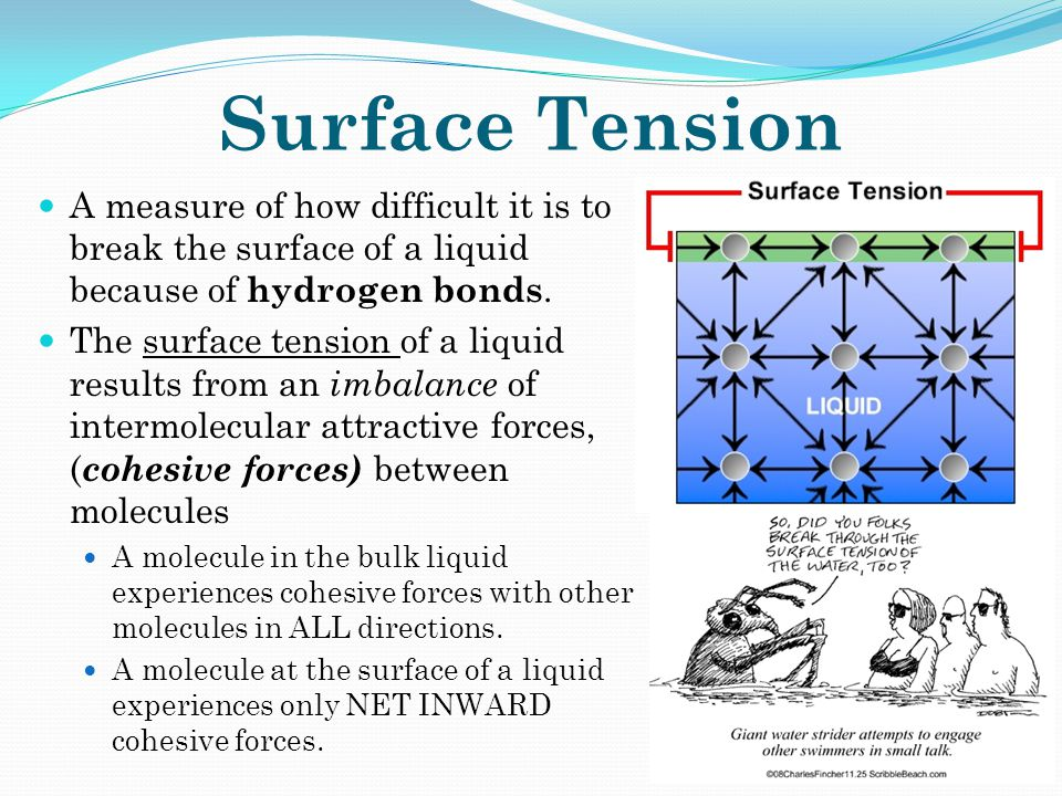 Surface Tension A measure of how difficult it is to break the surface of a liquid because of hydrogen bonds. The surface tension of a liquid results f