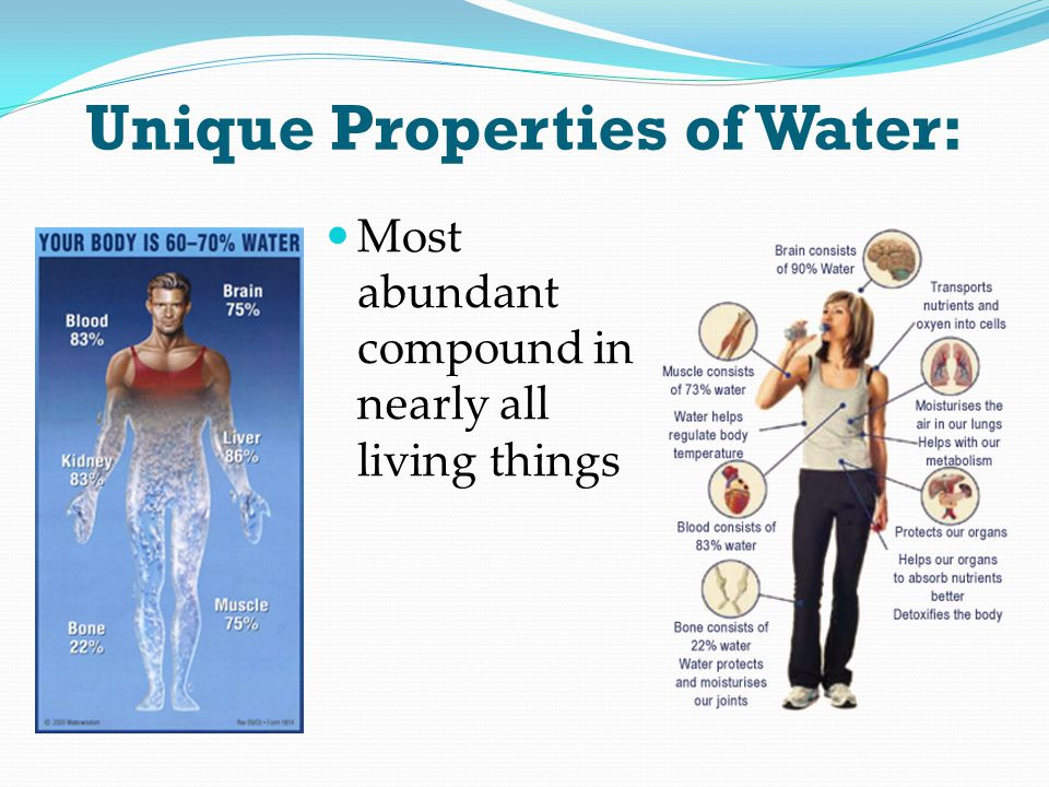 Unique Properties of Water: Most abundant compound in nearly all living things