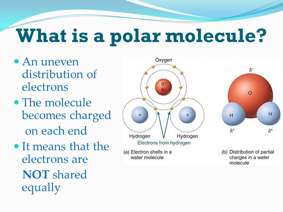 What is a polar molecule? An uneven distribution of electrons The molecule becomes charged on each end It means that the electrons are NOT shared equa