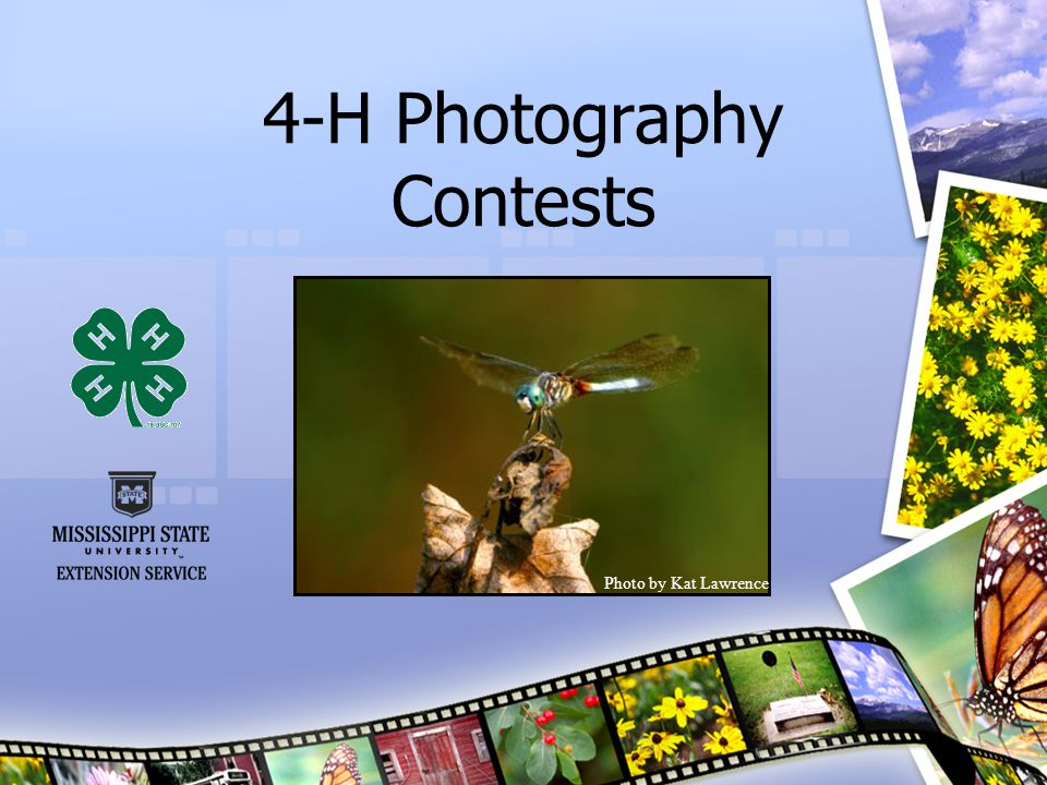Junior Photography Judging Contest Continued… Oral Reasons Continued (50 points) Once contestants have reviewed the four photographs and ranked them, they will fill out a Judging Contest Placing Card and give their reasons to selected judges.
