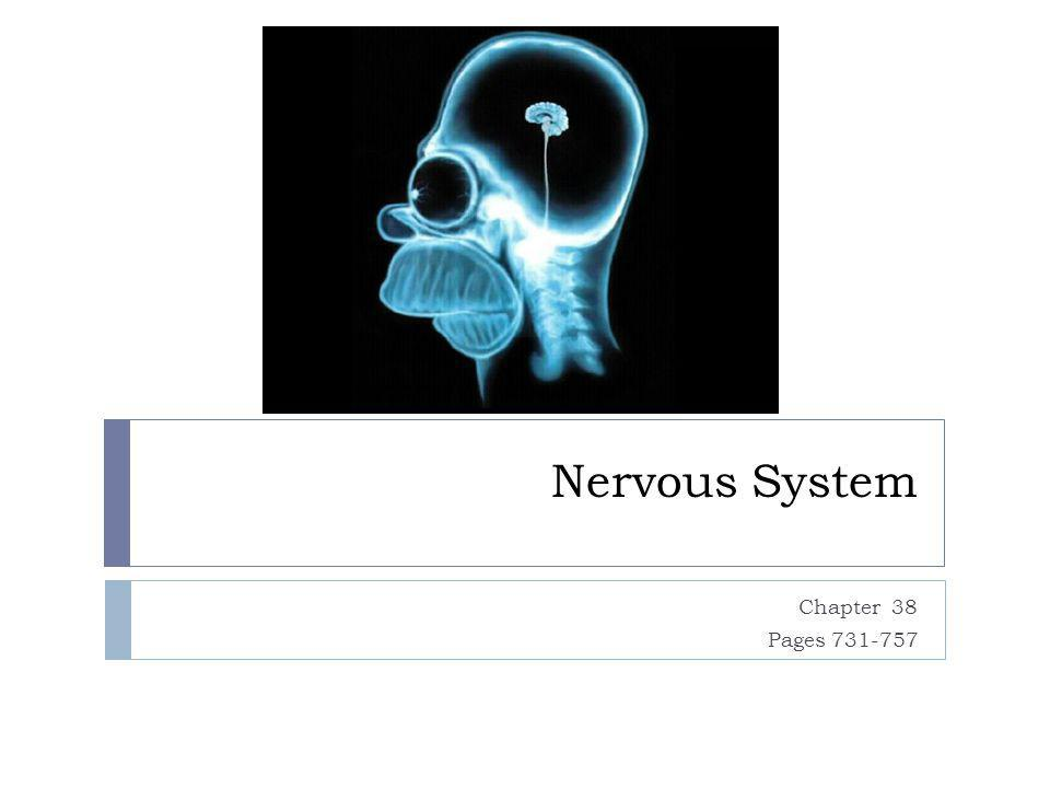 Nervous System Chapter 38 Pages 731-757