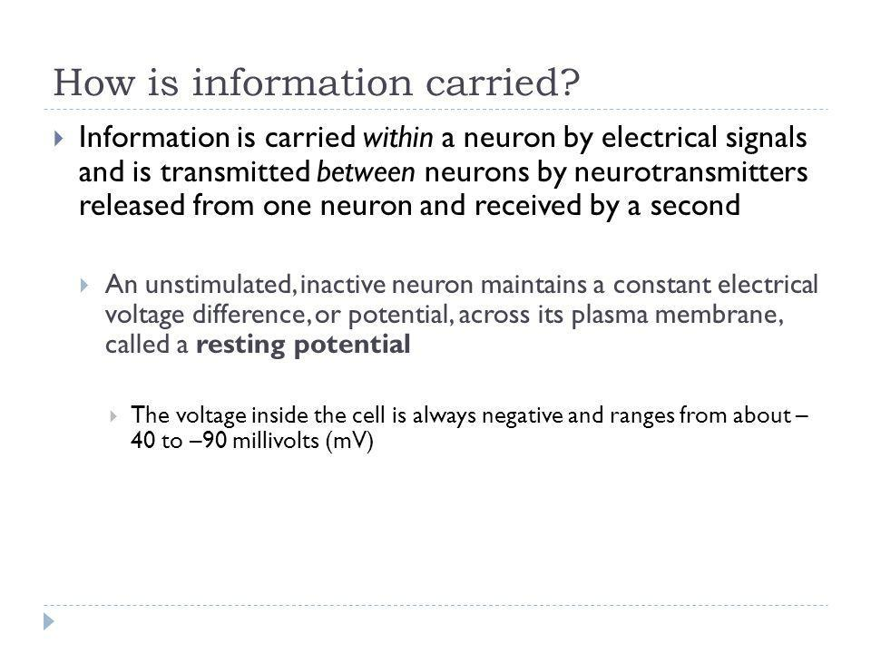 How is information carried? Information is carried within a neuron by electrical signals and is transmitted between neurons by neurotransmitters relea