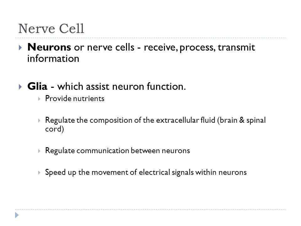 Nerve Cell Neurons or nerve cells - receive, process, transmit information Glia - which assist neuron function. Provide nutrients Regulate the composi