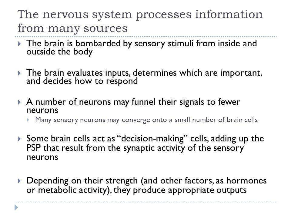 The nervous system processes information from many sources The brain is bombarded by sensory stimuli from inside and outside the body The brain evalua