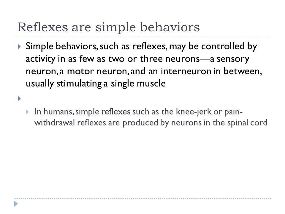 Reflexes are simple behaviors Simple behaviors, such as reflexes, may be controlled by activity in as few as two or three neuronsa sensory neuron, a m