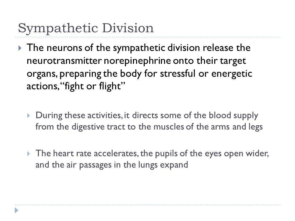 Sympathetic Division The neurons of the sympathetic division release the neurotransmitter norepinephrine onto their target organs, preparing the body