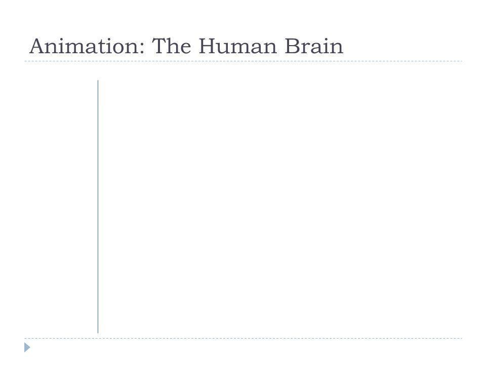 Animation: The Human Brain