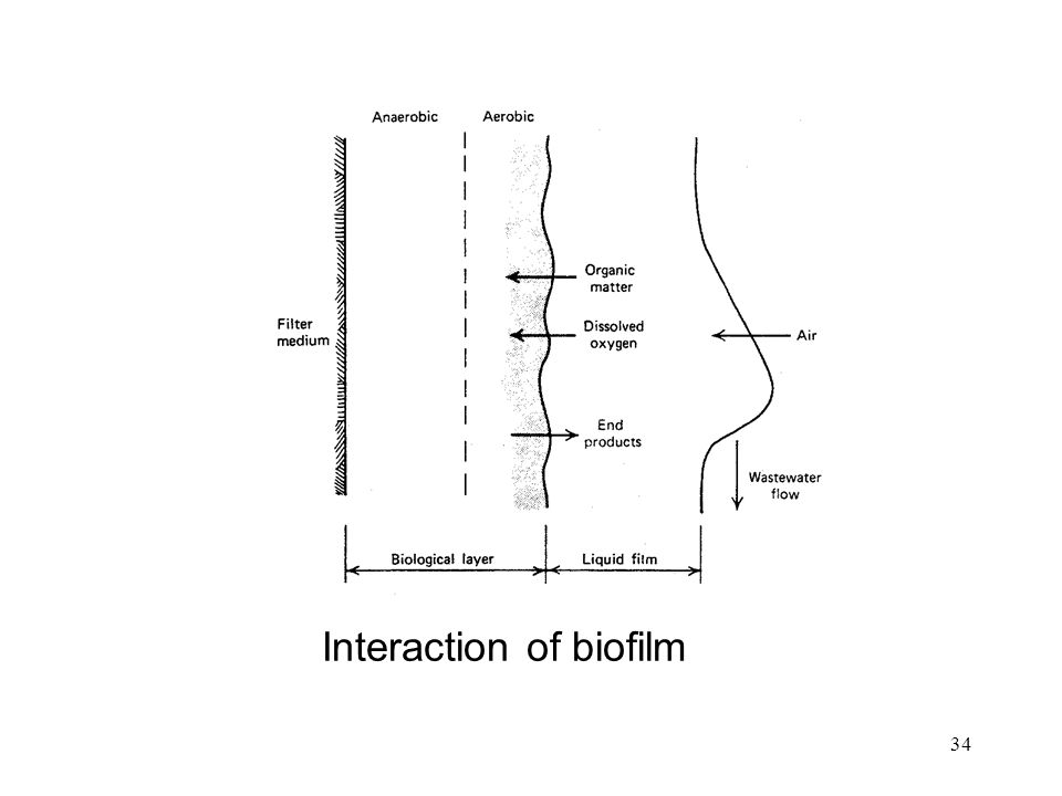 34 Interaction of biofilm