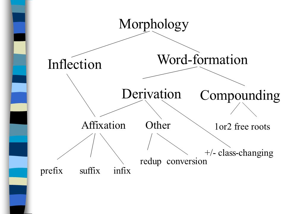 Morphology Inflection Word-formation Derivation Compounding AffixationOther 1or2 free roots prefix suffix infix redup conversion +/- class-changing