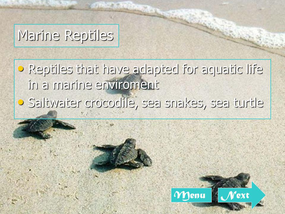 Reptiles that have adapted for aquatic life in a marine enviroment Reptiles that have adapted for aquatic life in a marine enviroment Saltwater crocodile, sea snakes, sea turtle Saltwater crocodile, sea snakes, sea turtle Marine Reptiles Next Menu