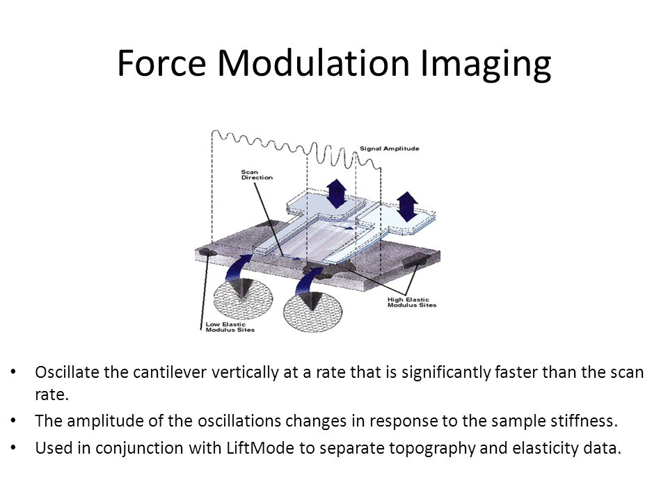 Force Modulation Imaging Oscillate the cantilever vertically at a rate that is significantly faster than the scan rate.