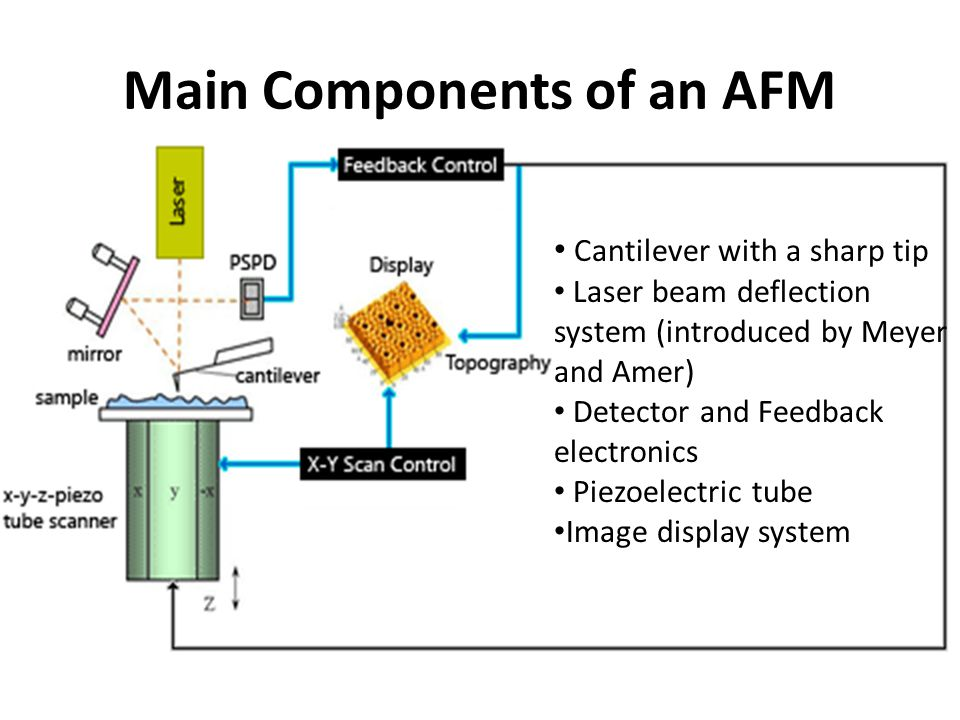 Main Components of an AFM Cantilever with a sharp tip Laser beam deflection system (introduced by Meyer and Amer) Detector and Feedback electronics Piezoelectric tube Image display system