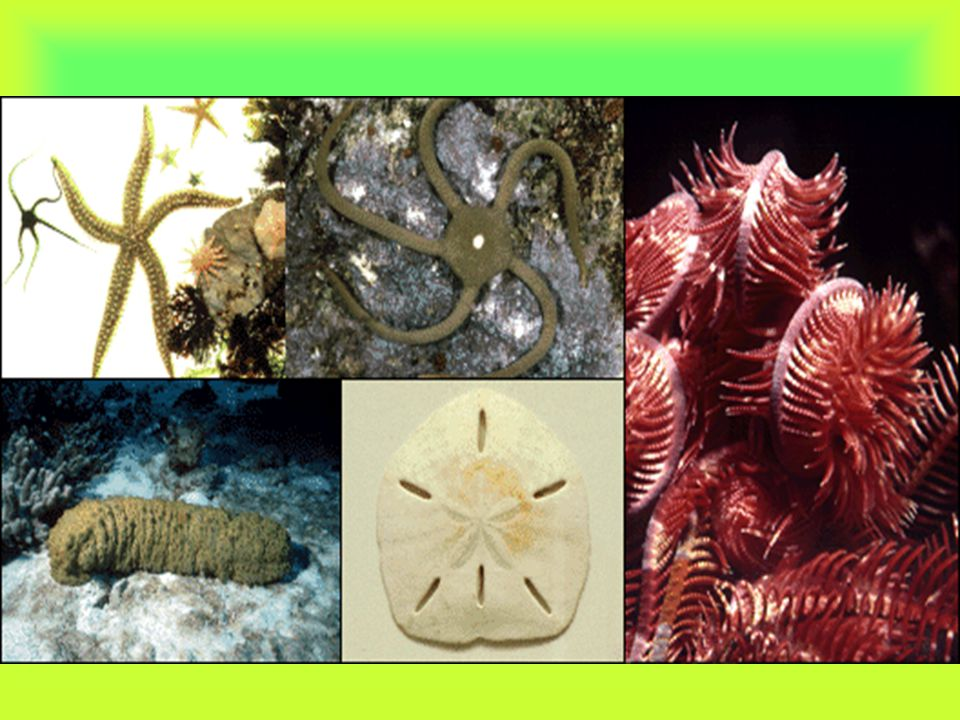 Invertebrates are by far the most numerous animals on Earth. Nearly 2 million species have been identified to date. These 2 million species make up ab
