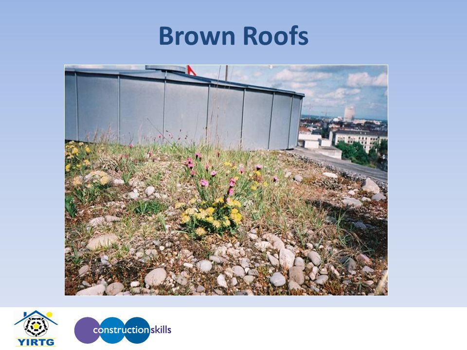 Brown Roofs