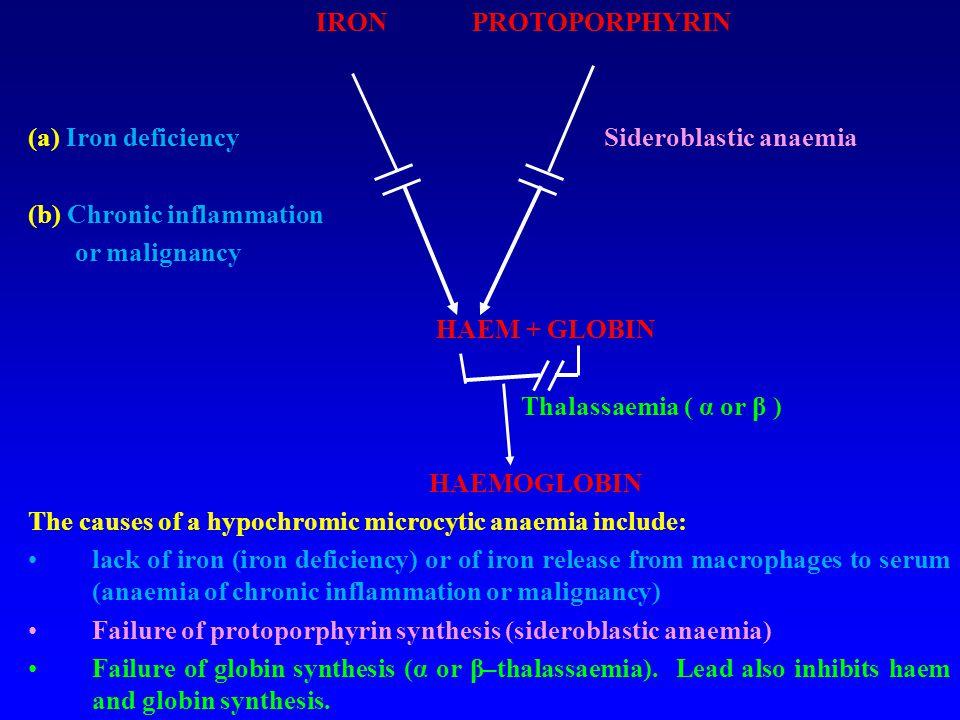 IRON PROTOPORPHYRIN (a) Iron deficiencySideroblastic anaemia (b) Chronic inflammation or malignancy HAEM + GLOBIN Thalassaemia ( α or β ) HAEMOGLOBIN
