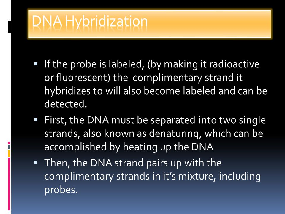 DNA Hybridization: Process where two complimentary strands of DNA (or a DNA and a RNA strand) come together to form a double helix.