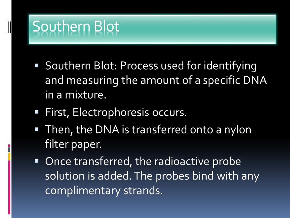 If the probe is labeled, (by making it radioactive or fluorescent) the complimentary strand it hybridizes to will also become labeled and can be detected.