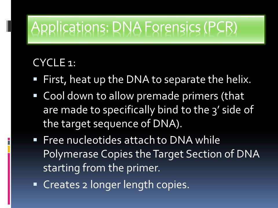DNA Fingerprinting(forensics): Process that uses PCR and Gel Electrophoresis to Examine DNA.
