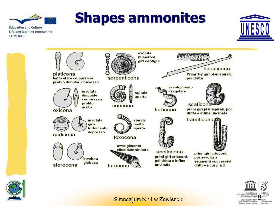 Shapes ammonites 8 Gimnazjum Nr 1 w Zawierciu