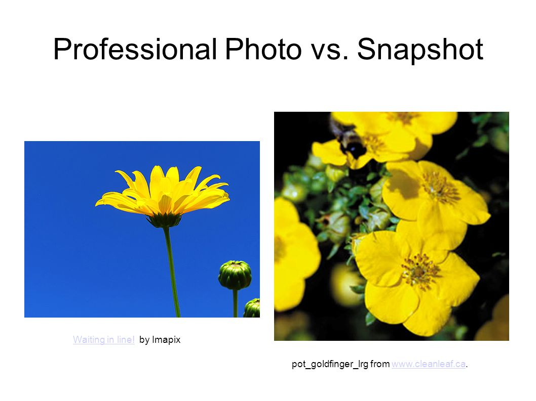 Professional Photo vs. Snapshot Waiting in line!Waiting in line! by Imapix pot_goldfinger_lrg from www.cleanleaf.ca.www.cleanleaf.ca