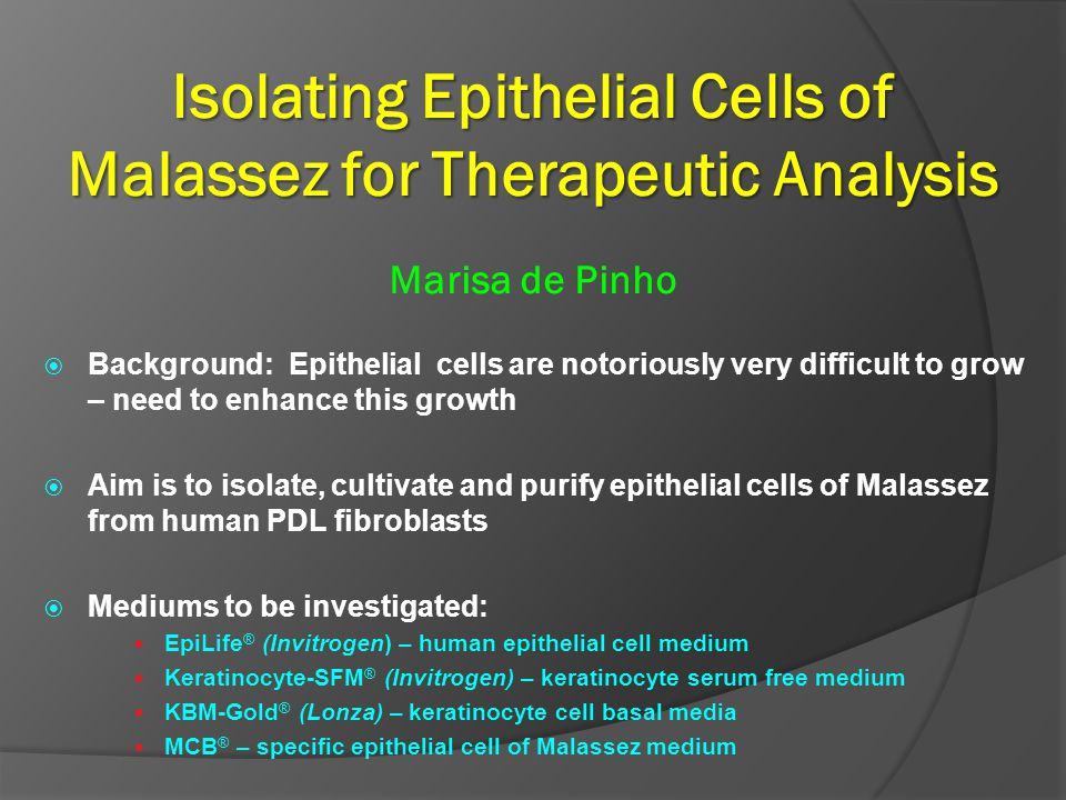Isolating Epithelial Cells of Malassez for Therapeutic Analysis Isolating Epithelial Cells of Malassez for Therapeutic Analysis Marisa de Pinho Backgr
