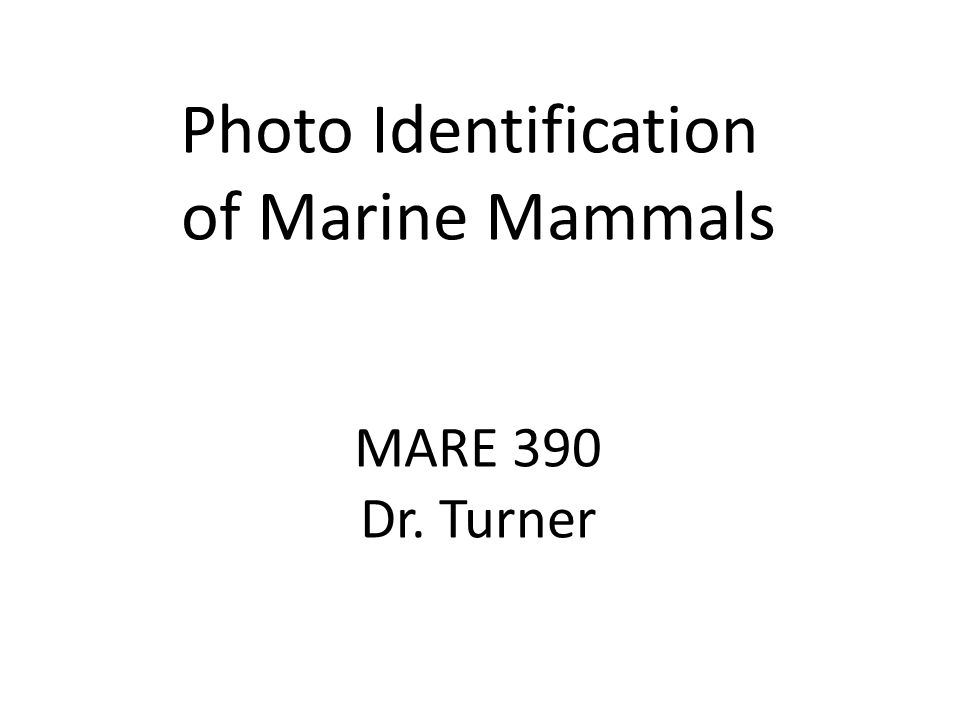 Photo Analysis Baiji – dorsal fin scars and nicks, and pigment areas Blainsvilles beaked whale – dorsal fin notches, white oval scars from cookie-cutter sharks, linear scars from intraspecific interactions