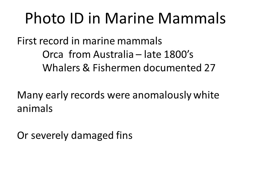 Photo ID in Marine Mammals First record in marine mammals Orca from Australia – late 1800s Whalers & Fishermen documented 27 Many early records were a