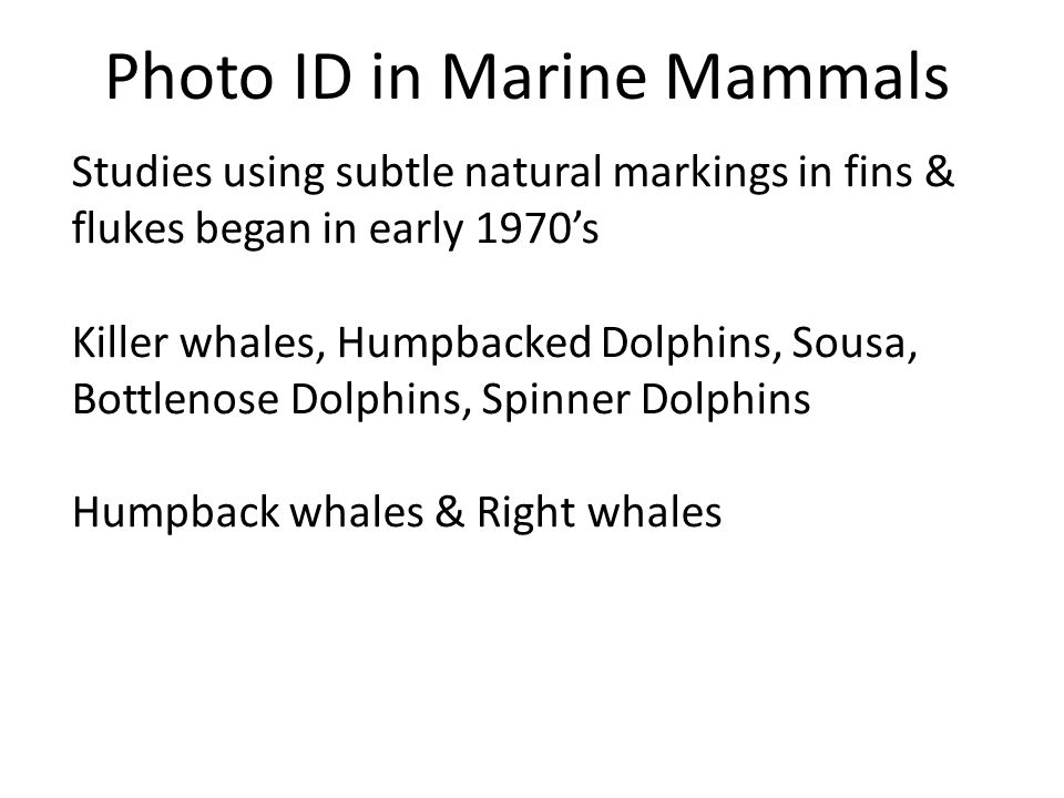 Photo Analysis Humpback whale – dorsal fin scars and nicks, cookie-cutter shark scars