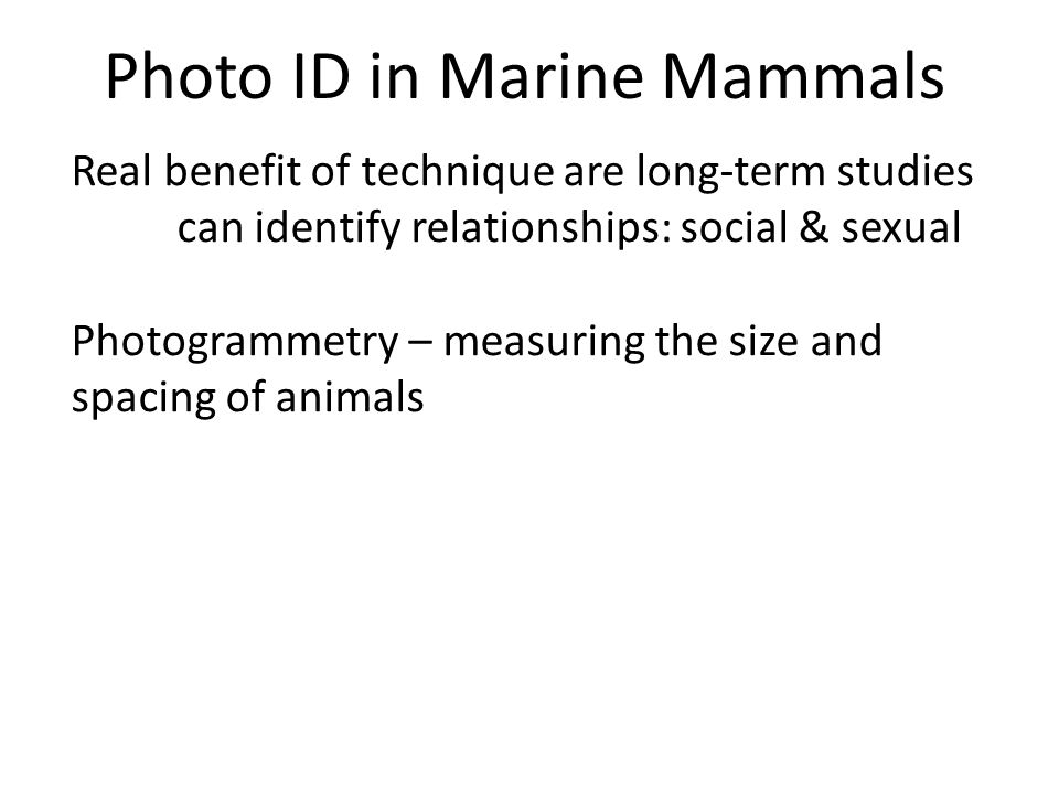 Photo ID in Marine Mammals Real benefit of technique are long-term studies can identify relationships: social & sexual Photogrammetry – measuring the