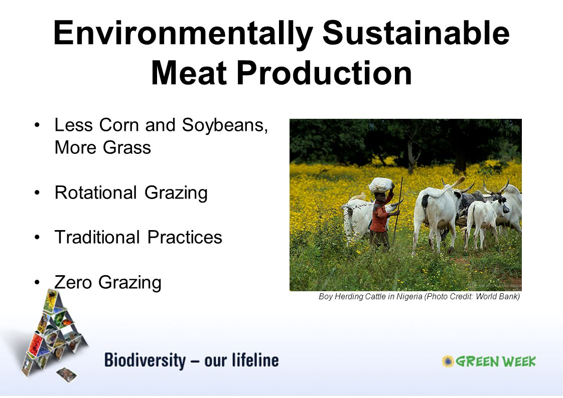 Environmentally Sustainable Meat Production Less Corn and Soybeans, More Grass Rotational Grazing Traditional Practices Zero Grazing Boy Herding Cattl