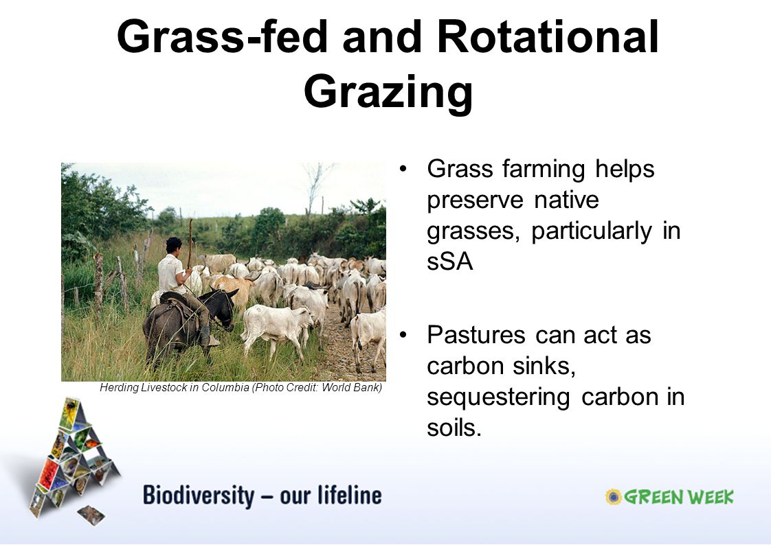 Grass-fed and Rotational Grazing Grass farming helps preserve native grasses, particularly in sSA Pastures can act as carbon sinks, sequestering carbon in soils.