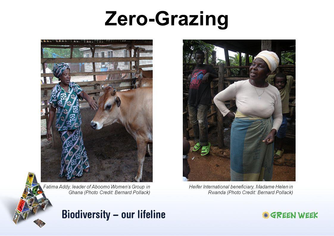 Zero-Grazing Heifer International beneficiary, Madame Helen in Rwanda (Photo Credit: Bernard Pollack) Fatima Addy, leader of Aboomo Womens Group in Gh