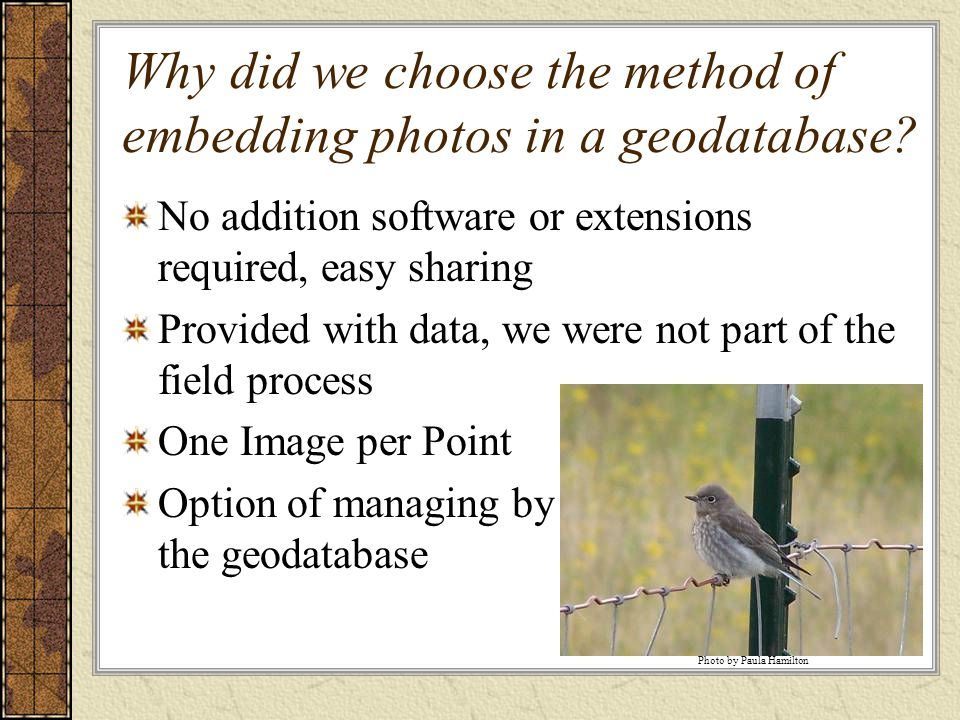 Why did we choose the method of embedding photos in a geodatabase.