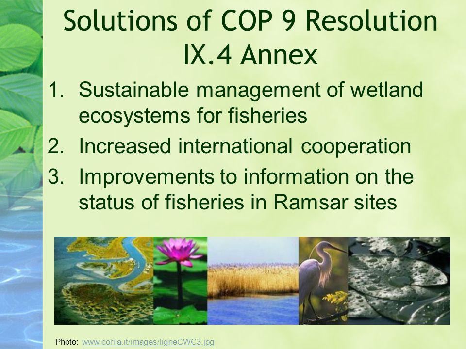 Solutions of COP 9 Resolution IX.4 Annex 1.Sustainable management of wetland ecosystems for fisheries 2.Increased international cooperation 3.Improvem
