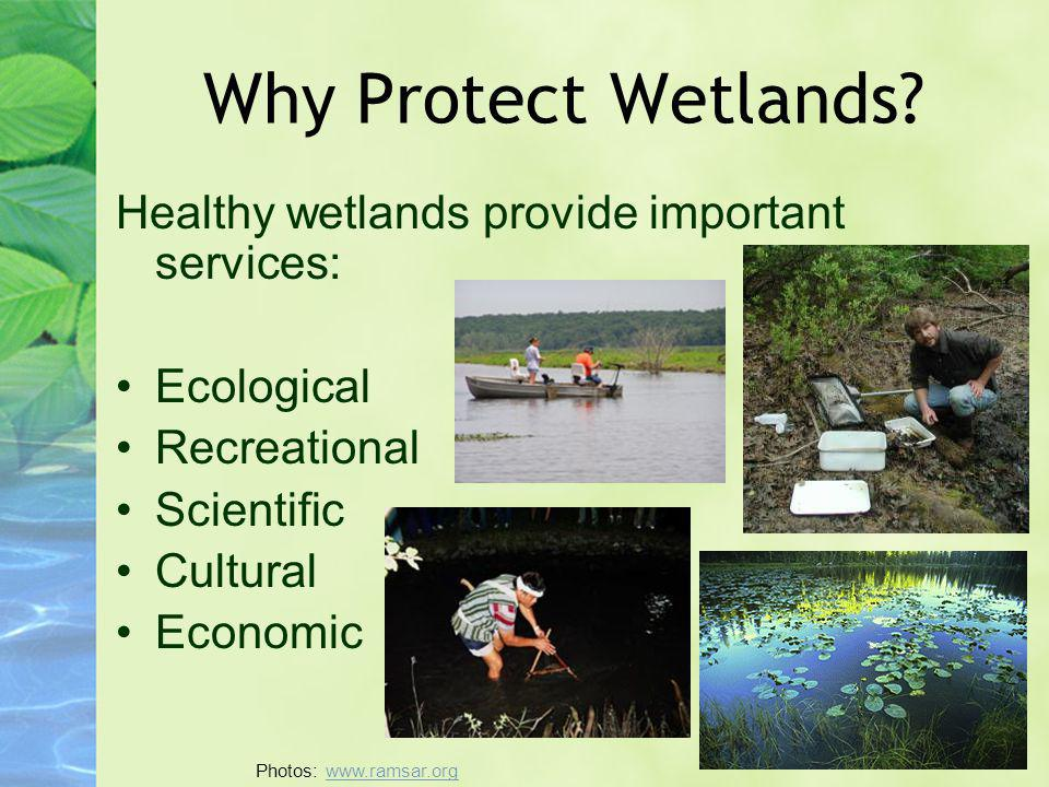 Why Protect Wetlands? Healthy wetlands provide important services: Ecological Recreational Scientific Cultural Economic Photos: www.ramsar.orgwww.rams