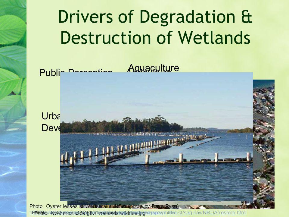 Drivers of Degradation & Destruction of Wetlands Public Perception Urban/Suburban Development Agriculture Aquaculture Photo: www.nrcs.usda.gov/ wetlan