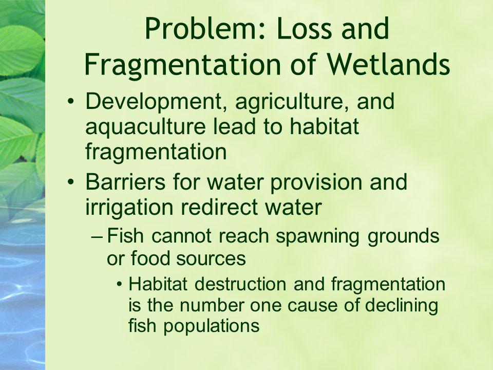 Problem: Loss and Fragmentation of Wetlands Development, agriculture, and aquaculture lead to habitat fragmentation Barriers for water provision and i