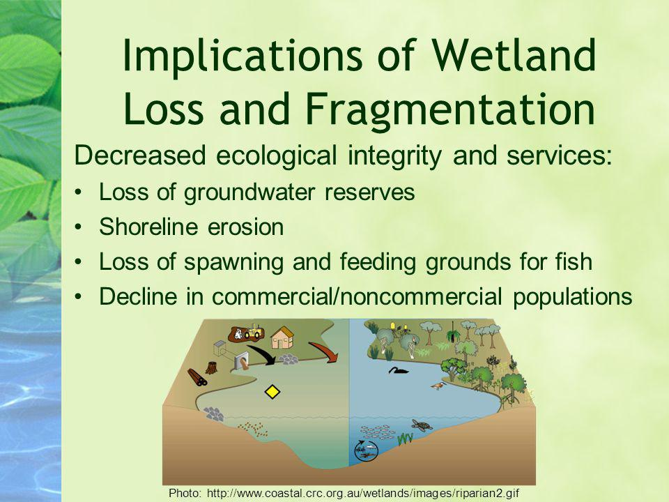 Implications of Wetland Loss and Fragmentation Decreased ecological integrity and services: Loss of groundwater reserves Shoreline erosion Loss of spa