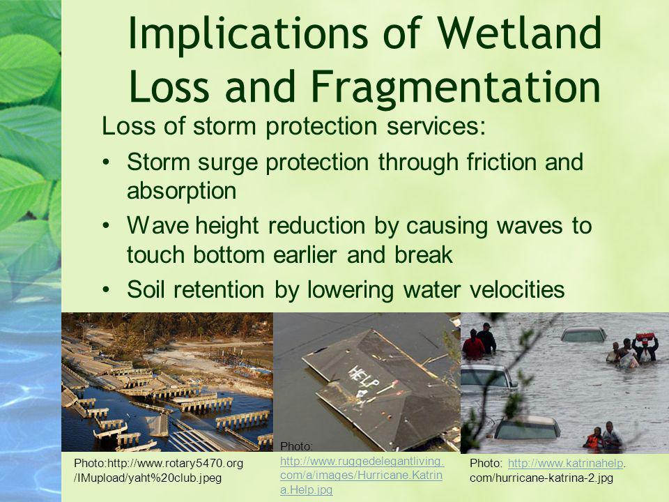 Implications of Wetland Loss and Fragmentation Loss of storm protection services: Storm surge protection through friction and absorption Wave height r