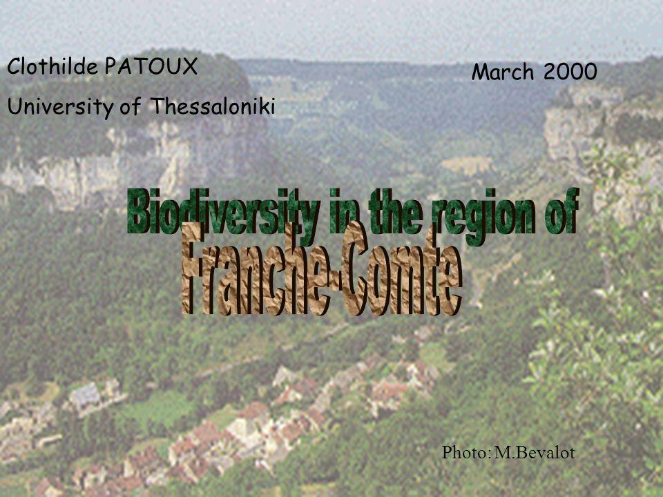 Clothilde PATOUX University of Thessaloniki March 2000 Photo: M.Bevalot