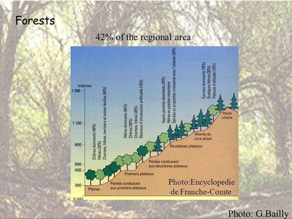 Forests 42% of the regional area Photo: G.Bailly Photo:Encyclopedie de Franche-Comte