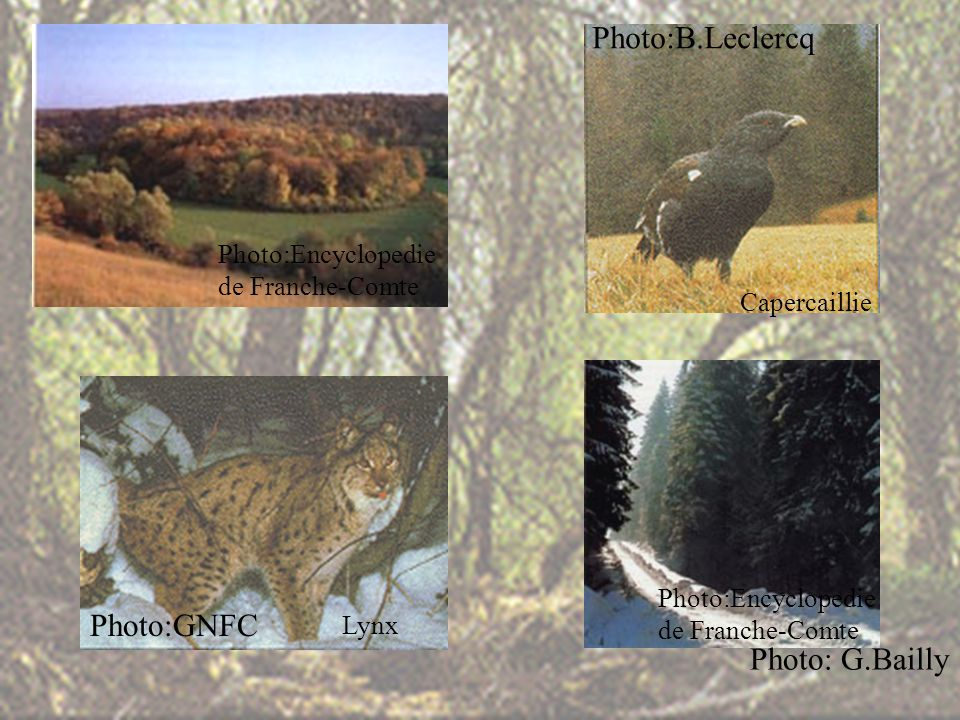 Capercaillie Lynx Photo: G.Bailly Photo:B.Leclercq Photo:GNFC Photo:Encyclopedie de Franche-Comte Photo:Encyclopedie de Franche-Comte