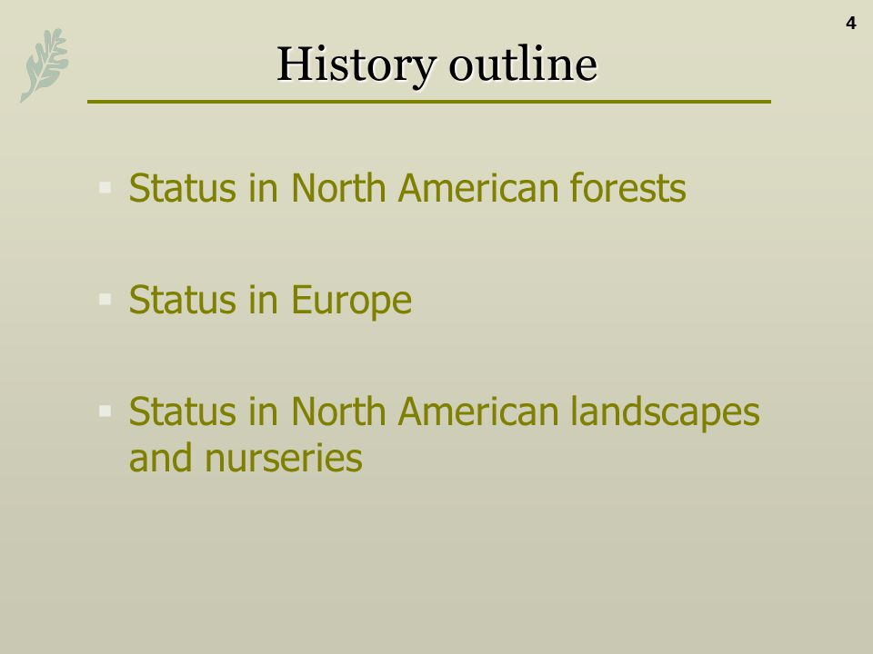 History outline Status in North American forests Status in Europe Status in North American landscapes and nurseries 4