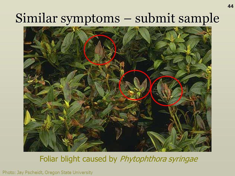 Photo: Jay Pscheidt, Oregon State University Similar symptoms – submit sample Foliar blight caused by Phytophthora syringae 44