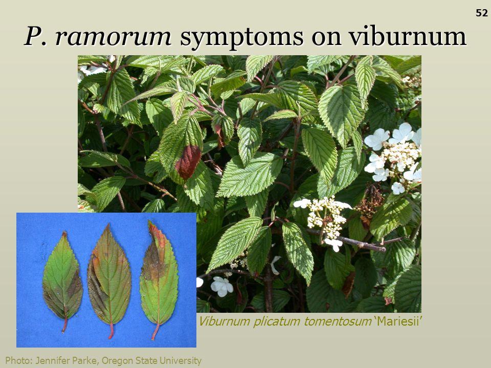 Viburnum plicatum tomentosum Mariesii P. ramorum symptoms on viburnum Photo: Jennifer Parke, Oregon State University 52
